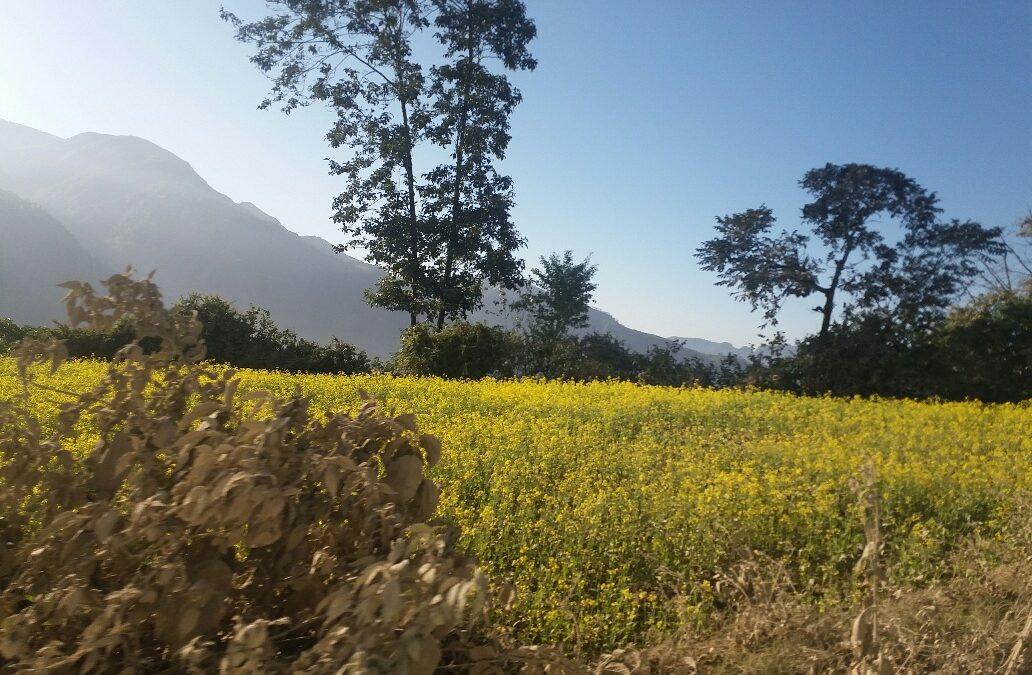 De vuelta en Nepal